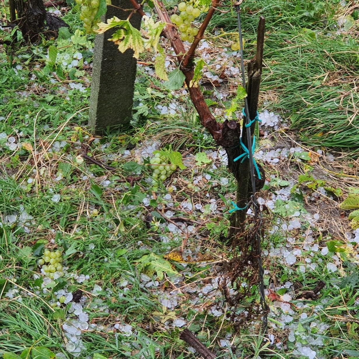 Posledice neurja v Gomili pri Kogu. Foto: Bojan Šterman