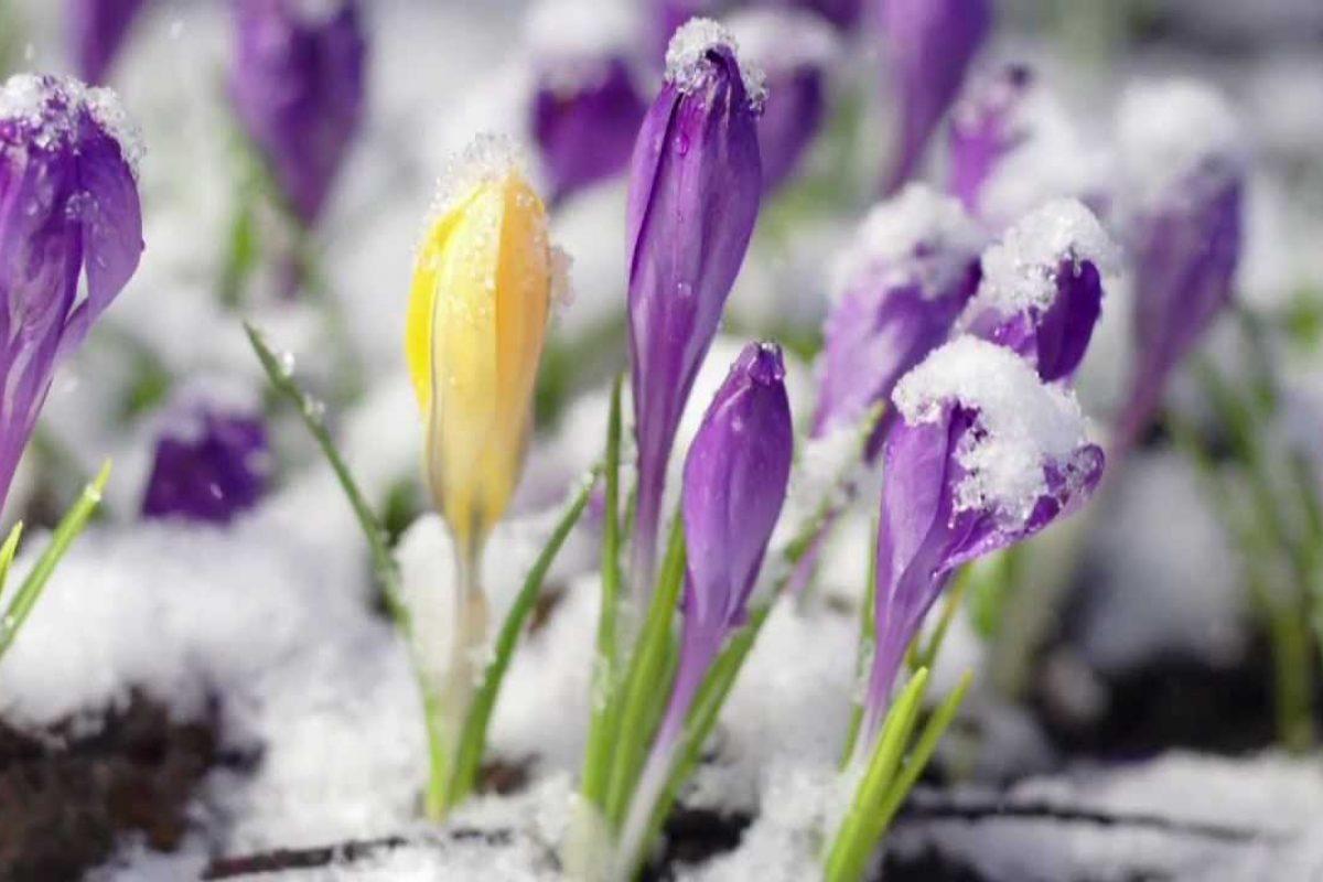OHLADITEV JE TU: Snežilo bo zelo nizko, obstaja velika nevarnost pozebe!