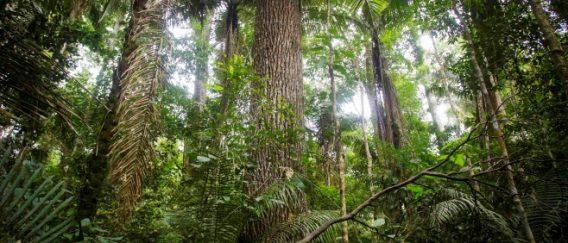 Podnebja tropskega pasu
